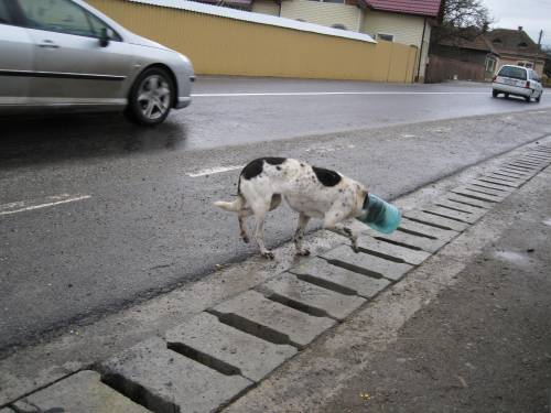 A poor dog whose head got stuck in a plastic bottle.