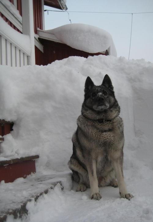 Mossi, her dog, wondering when it will stop snowing??